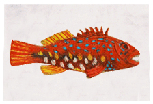 a coloured pencil drawing of a bright red fish